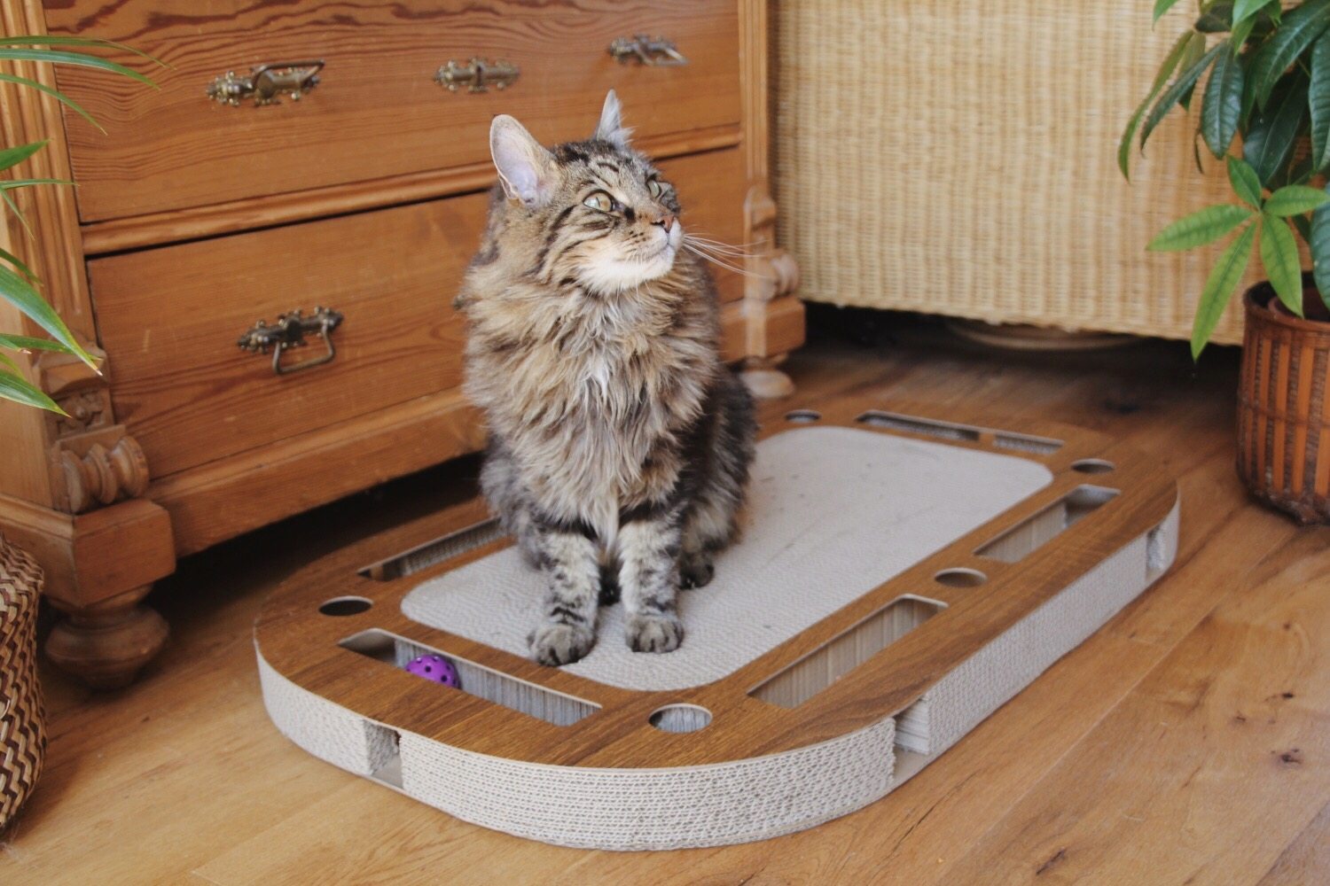 play plate von canadiancat
